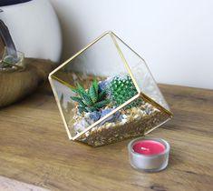 Gold Brass Cube Geo Terrarium with Cactus and Succulent Mix - 3 Sizes Available - The Art of Succulents Mini Cactus Plants, Small Cactus, Cactus Flower, Cacti And Succulents, Planting Succulents, Large Terrarium, Glass Terrarium, Terrarium Kits, Farbiger Sand