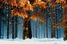 Cold Orange by Lars van de Goor on 500px