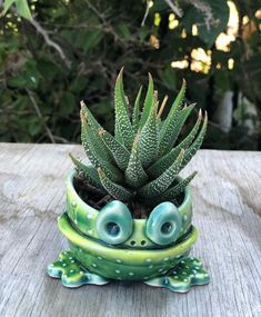 Succulents aren't supposed to have brown, mushy leaves, or white fuzzy spots all over them! Learn how to start saving your dying succulents! Scale Insects, Zebra Plant, Succulent Soil, Growing Succulents, Replant, Potting Soil, Echeveria, Backyard Landscaping, Indoor Plants