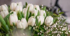 Kalenderwoche 02: 20 Tulpen, Ginster & Pistazie