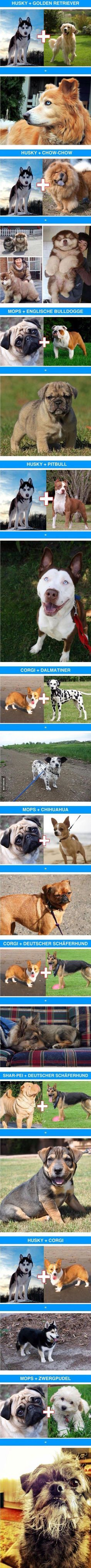 Some dog breeds mixed with others.