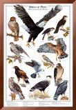 Birds of Prey I Print