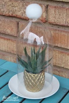 Upcycle a 2 liter bottle to make a cloche terrarium!