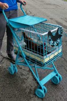Chicken Stroller ~ I made this for my daughter as her Birthday gift. She LOVES it! And the chicken actually jumps in there on her own and enjoys the ride. Who knew?! Ha :)