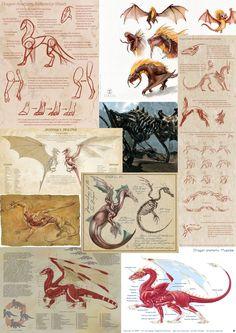 Dragon+anatomy.jpg (1131×1600)