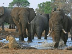 is home to one of the world's seven A offers beautiful landscapes and fantastic game viewing opportunities. Here is the list of selected place of that you must not miss while you are on Zimbabwe Africa, Majestic Animals, Africa Travel, Natural Wonders, Canoe, Beautiful Landscapes, Safari, National Parks, Wildlife