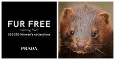 Prada Just Announced They Are Going Fur-Free Animal Fur, Miuccia Prada, Interesting News, Humane Society, Creative Director, Icon Design, People, Animals, Free