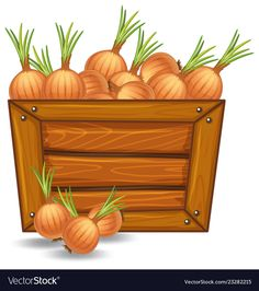 Onion on wooden template illustration , Health And Fitness Magazine, Background Design Vector, Retail Logo, Autumn Activities, Kindergarten Activities, Hope Chest, Adobe Illustrator, Onion, Scrap