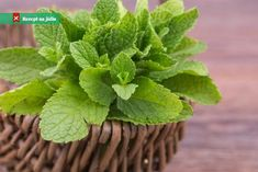 Mint Leaves health benefits includes aiding digestion, treat dizziness, treating… - Cosas Que Hacer Para Una Boca Sana Mint Leaves Benefits, Fresh Mint Leaves, Lemon Balm, Heartburn, Medicinal Plants, Dental Health, Pet Health, Pest Control, Health Benefits