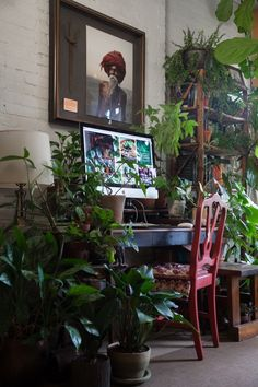 Houseplant enthusiast Summer Rayne Oakes has 670 plants in her Brooklyn apartment and shares her tips for living with plants in low light and drafty rooms.