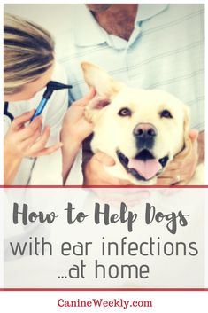 Help dog Mom and puppies in Noginsk, Russia Dog Ear Cleaner, Dogs Ears Infection, Top Dog Breeds, Itchy Dog, Sleeping Dogs, Training Your Dog, Dog Care, Dog Grooming, Dog Mom