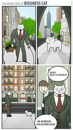 The Adventures of Business Cat #9 #gatos