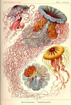 Ernst Haeckel, Forme d'arte della natura 1899-1904 - download the entire book (398 pages) in .pdf on http://caliban.mpiz-koeln.mpg.de/haeckel/kunstformen/Haeckel_Kunstformen.pdf