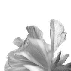 12:21 写真展詳細→ https://www.facebook.com/photographer.ei * #photography #flowers #flowerslovers #flowersofinstagram #ig_photostars_bw #flowerzdelight #tv_closeup #flowersandmacro #ig_bw_flowers #bnwbutnot #foto_blackwhite #ig_global_bw #ig_artistry #fineart_photobw #monochrome #blackandwhite #bnw #bnwrome_details #bnw_baoli #bnw_fanatics #tv_monotones #花部 #花部 #写真展 #exhibition #ファインダー越しの私の世界  #japan #sapporo