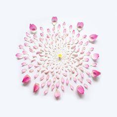 Renklim Blog – Burada renkli bir şeyler var! – Çiçekler her haliyle güzel…