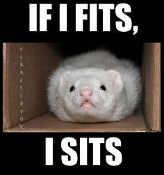 #ferret #fuzzy #cute #adorable #animals #playing #biting #fun #want #ferrets #weasels