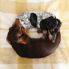 Dachshund Donut