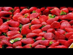 Most Beautiful Strawberry Fruit