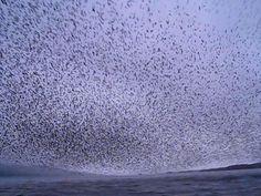 VIDEO: Paseaban en bote y fueron testigos de un increíble espectáculo de la naturaleza