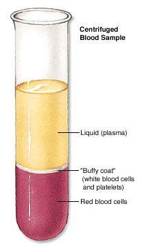Centrifuged Blood Sample