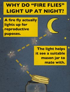 Why Do Fire Flies Light Up At Night?