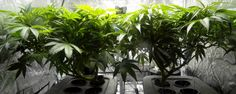 This NASA Researcher Is Now Using His Skills to Grow Marijuana   Motherboard