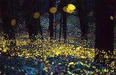 I dream of seeing fire flies one day...