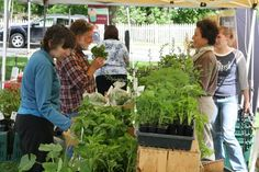 Shoppers peruse plants at the Dorset Farmers Market.