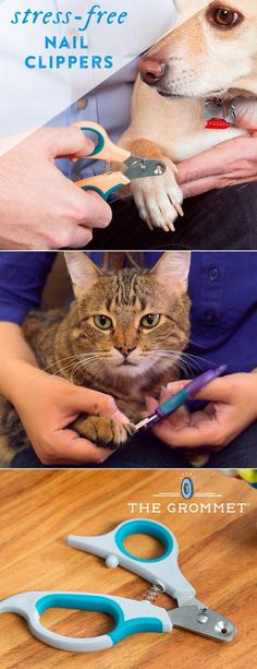 With perfectly sized (and smartly designed) pet nail clippers, animal nail trims are easier, faster, and safer—and less stressful for you and your pet. The conical design—which comes in seven sizes to suit your pet (from small birds and lizards up to larg Happy Animals, Animals And Pets, Cute Animals, Animals Planet, Dog Clippers, Nail Clippers, Pet Dogs, Dogs And Puppies, Chihuahua Dogs