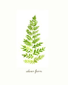 Buy 2 Get 1 Free Fern watercolor painting Silver fern by colorZen