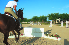 Andre Dignelli's 5-Step System for Jumping 'Skinny' Fences | Practical Horseman