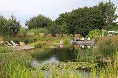 Ellicar natural swimming pool Natural Pond, Family Garden, Outdoor Furniture Sets, Outdoor Decor, Swimming Pools, Wildlife, Ponds, Nature, Gardens