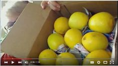 Lemons aren't just for a sugary lemonade! Learn how healthy they are for you! www.SherriConnell.com