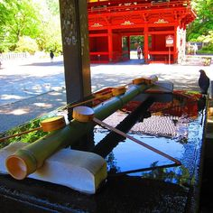 Nezu-jinja Shrine in Tokyo's Bunkyo ward is one of Japan's oldest shrines and its architecture is unique in that it was built in Gongen-style which has been maintained until today.  #japan