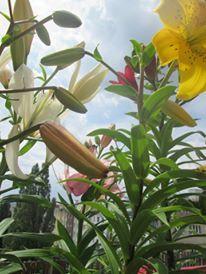 Foto:@johanahajkova Plants, Art, Pictures, Art Background, Kunst, Plant, Performing Arts, Planets, Art Education Resources
