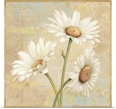 Daphne Brissonnet Poster Print Wall Art Print entitled Beautiful Daisies II, None