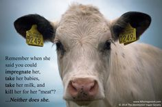 Dairy Is Cruel! #NationalDairyMonth #DairyPromise #JuneIsDairyMonth #Farm365 #GoVegan #junedairymonth #worldmilkday