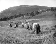 Knud Knudsen, Harvesting grain in Sunnmoere, Norway, ca. Lappland, Oldenburg, Fjord, Yahoo Images, Wild West, Norway, Image Search, Dolores Park, Street Art
