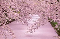 都会の桜もいいけれど、日本人なら死ぬまでに一度みたい桜の絶景スポット。写真だけで衝動的に行きたくなるインパクトのある、情緒あふれる日本の桜の絶景をご紹介します。