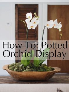 How To: Potted Orchids Displayed In A Dough Bowl Potted Orchid Centerpiece, Orchid Flower Arrangements, Orchid Planters, Orchid Terrarium, Orchid Pot, Terrariums, Orchid Flowers, Silk Flowers, How To Plant Orchids