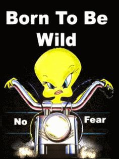 Tweety Bird quotes and pics facebook page | Born To Be Wild Photo by Cute_Stuff | Photobucket