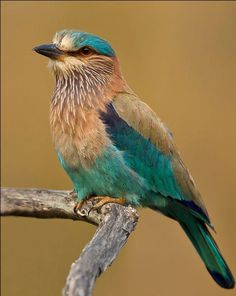 An alluring sight of bird Kabini...