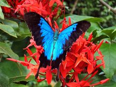 We've got birds and bees and butterflies and beautiful flowers galore at Palm Cove!! All of these pics are from tropical North Queensland, can you believe it!
