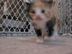 Sorry Adele but I think this kitten is of the world! Cute kitten says. Kitten Gif, Cat Gif, I Love Cats, Say Hello, Kittens Cutest, Adele, Thing 1, World, Funny