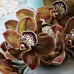 chocolate brown silk amaryllis | wedding flower ideas coral hued amaryllis and poppies and chocolate ...