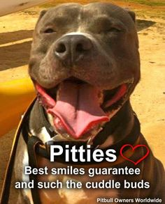 Pitties are beautiful in every way!  #dogs #pets #Pitbulls  facebook.com/sodoggonefunny
