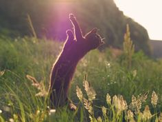#blackcat in the #spring