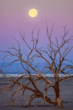 Setting Moon at the Salton Sea by Ian Frazier on 500px.com