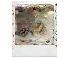 Here's What Happens When You Put Instant Film in a Microwave | Arts & Culture | Smithsonian