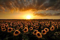 Ci sono pittori che dipingono il sole come una macchia gialla, ma ce ne sono altri che, grazie alla loro arte e intelligenza, trasformano una macchia gialla nel sole.